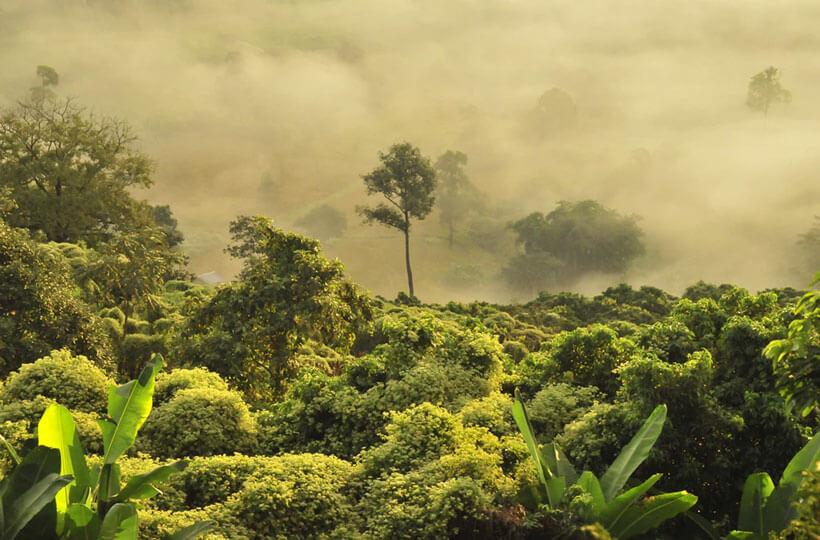 Fog hanging over a Southeast Asian jungle